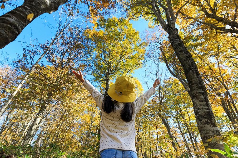living_near_trees_makes_us_healthier.jpg