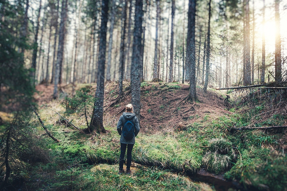 trees_making_us_healthier.jpg