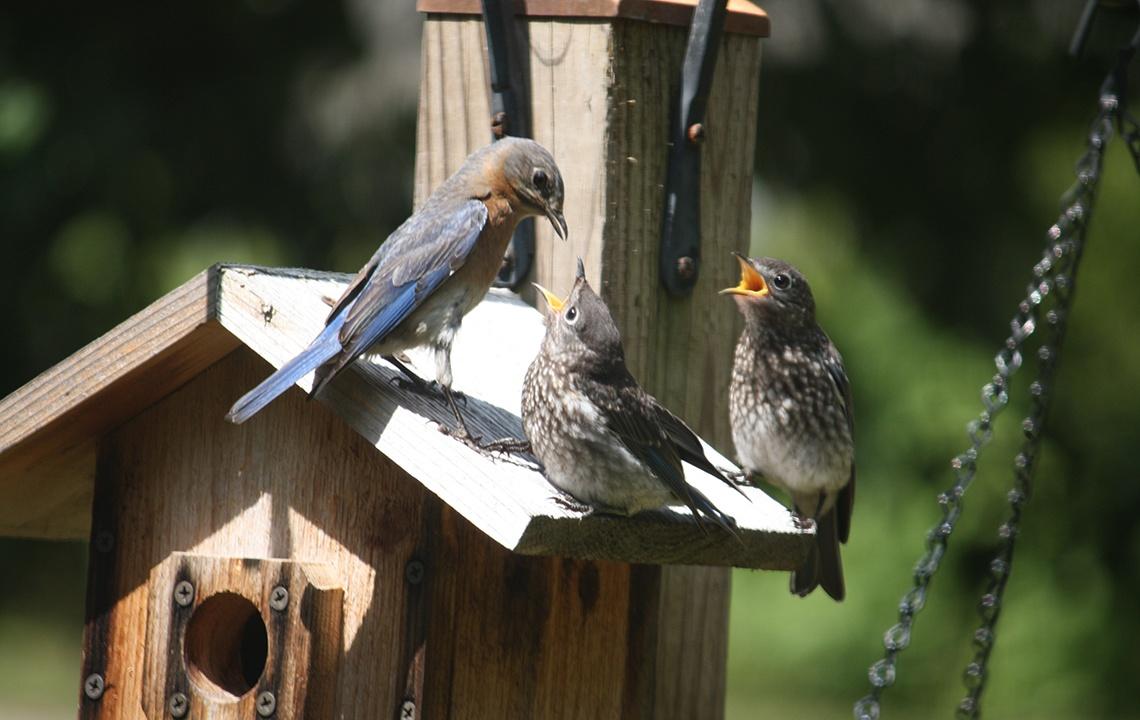 Attract birds to backyard.jpg