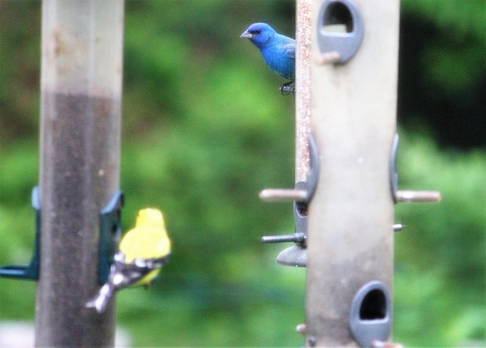 Birds in Backyard.jpg