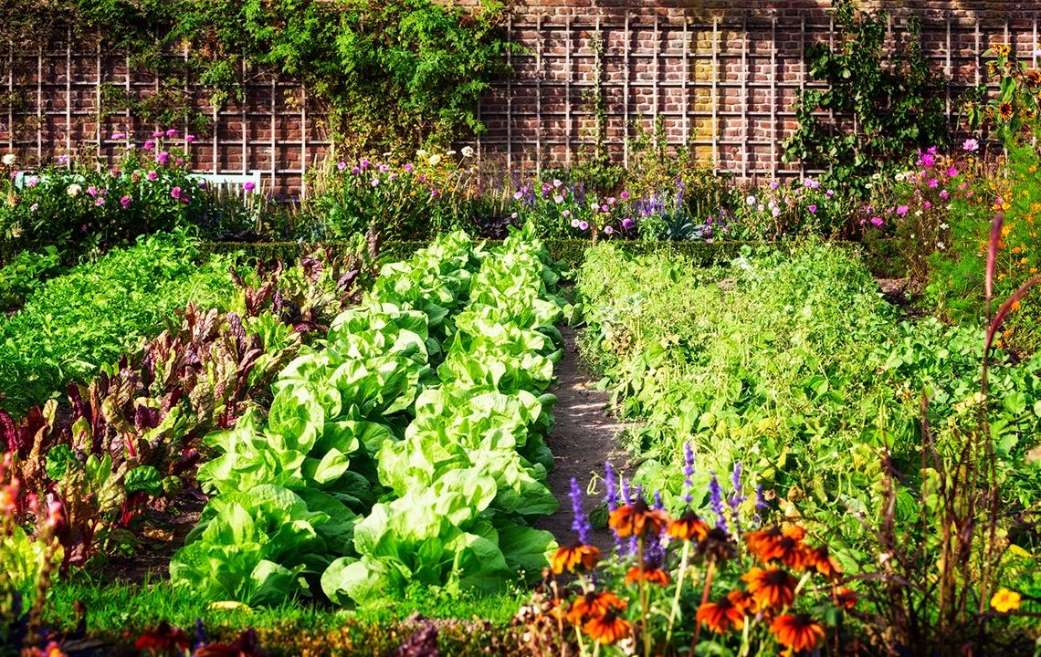 Master Planned Garden.jpg