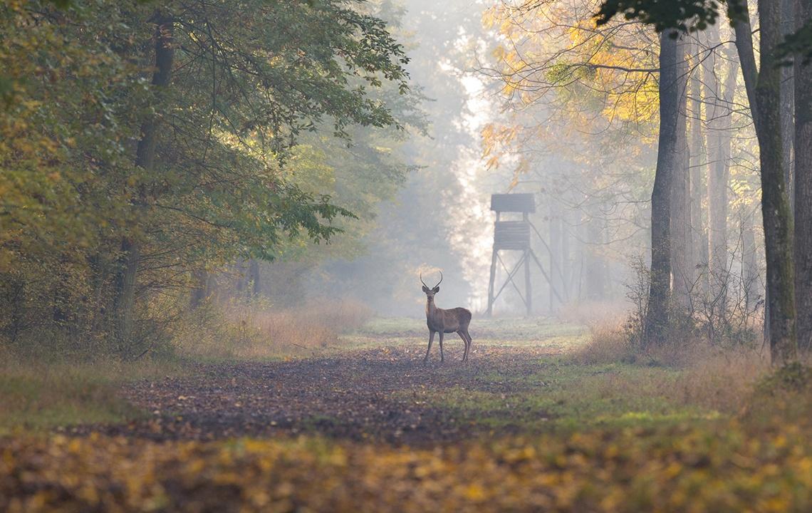 Hunting Sustainably.jpg