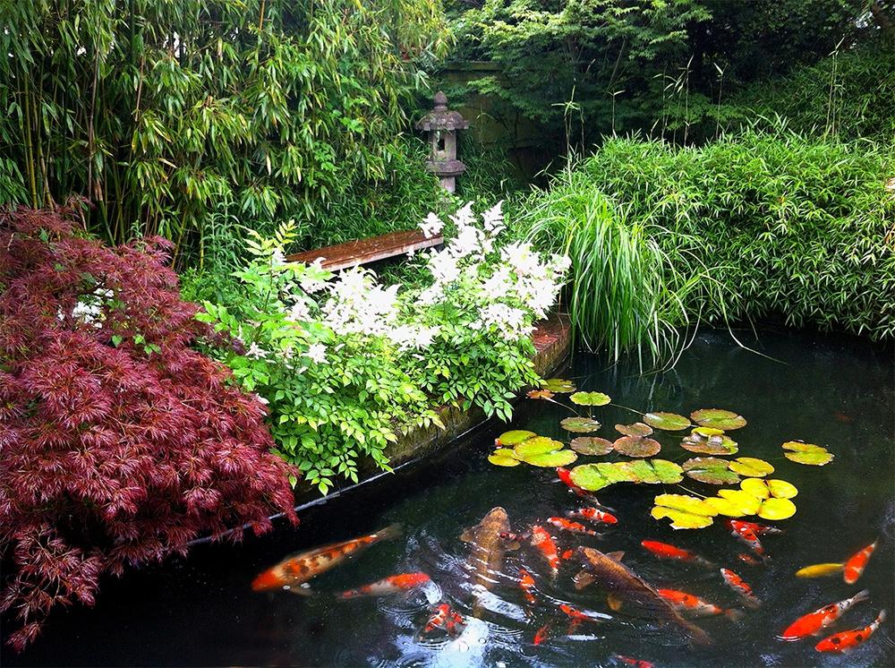 DIY Fish Pond.jpg