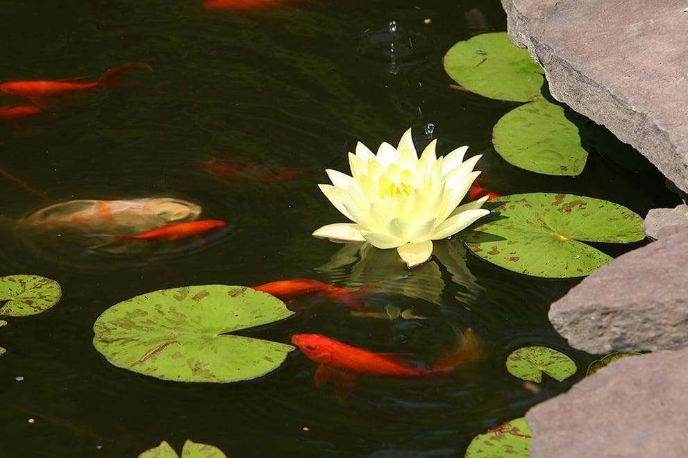 DIY Koi Pond.jpg