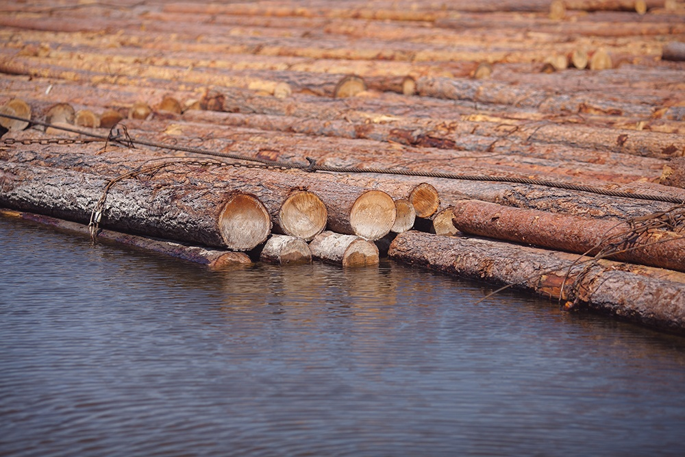 Logs Moved by River.jpg