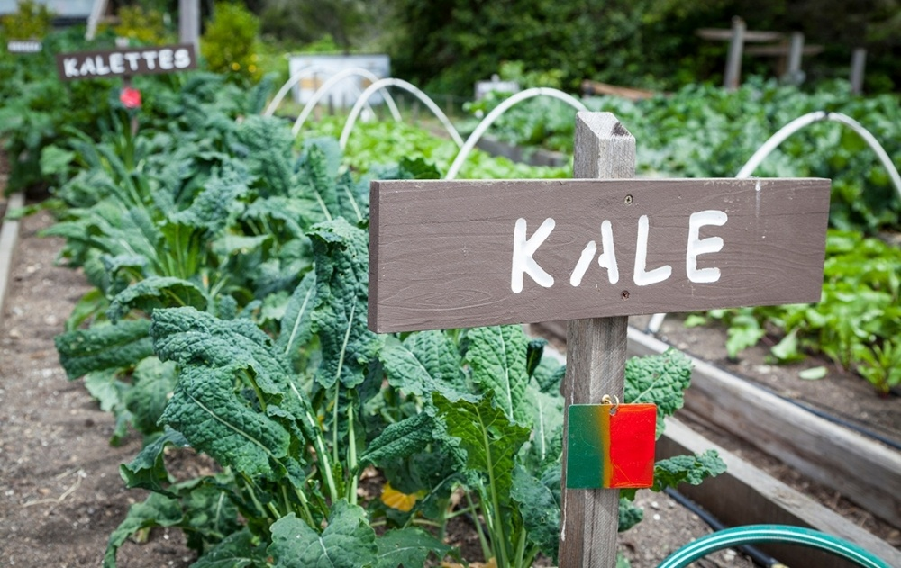 Kale_Featured-933021-edited.jpg