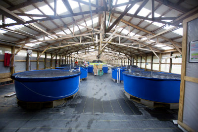 Inside_aquaponics_greenhouse.jpg