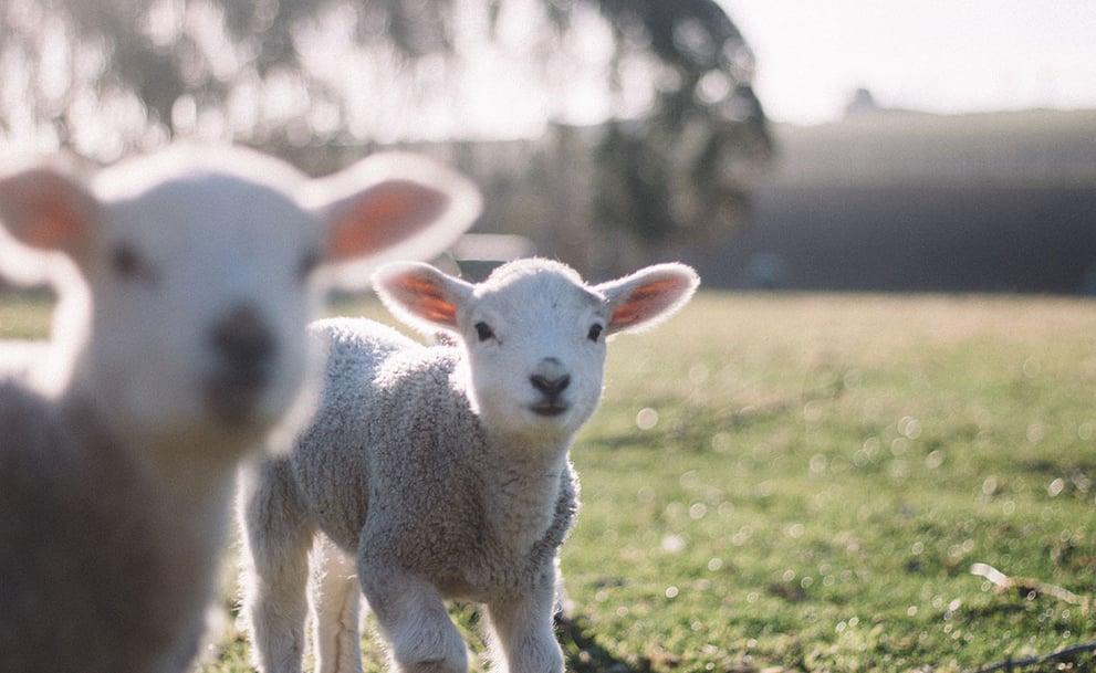 Small Farm Goats