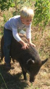 Hobby-Farm-Riding-a-pig.jpg