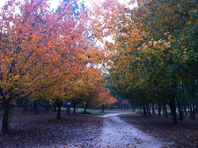 Hobby-Farm_Tree_Lined_Driveway.jpg
