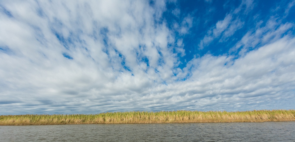 Louisiana Bayou Preservation.jpg