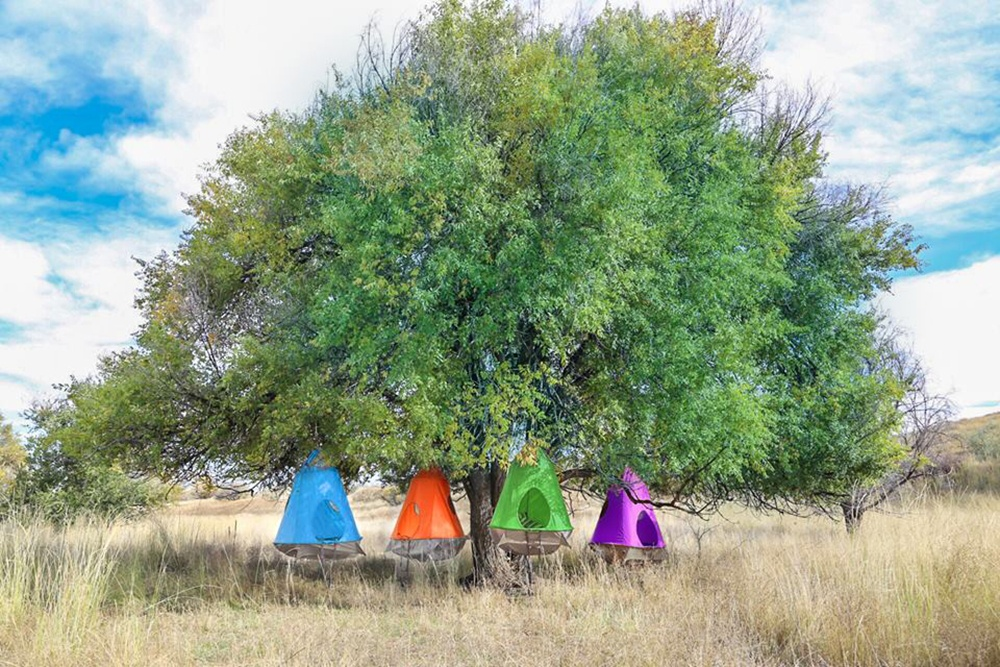 SM_TreePods_Hanging_from_Tree.jpg