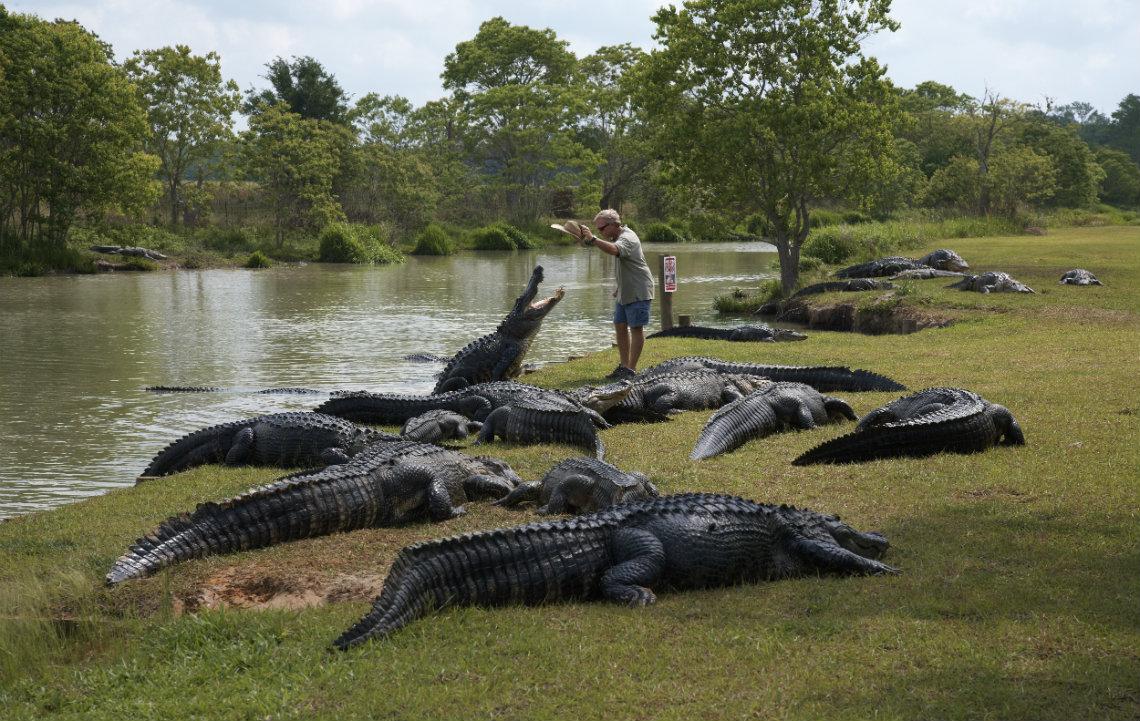 Alligator Alley Alabama Wes Moore