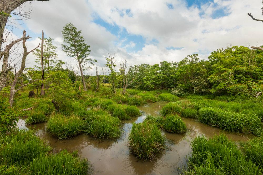 Alligator_Alley_Wetlands.jpg