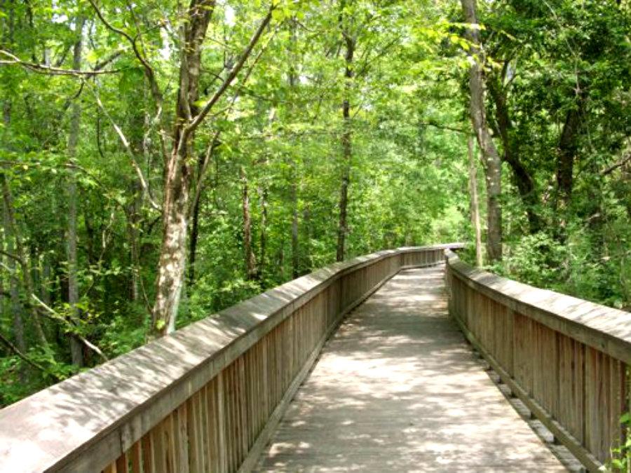Tickfaw_State_Park_board_walk.jpg