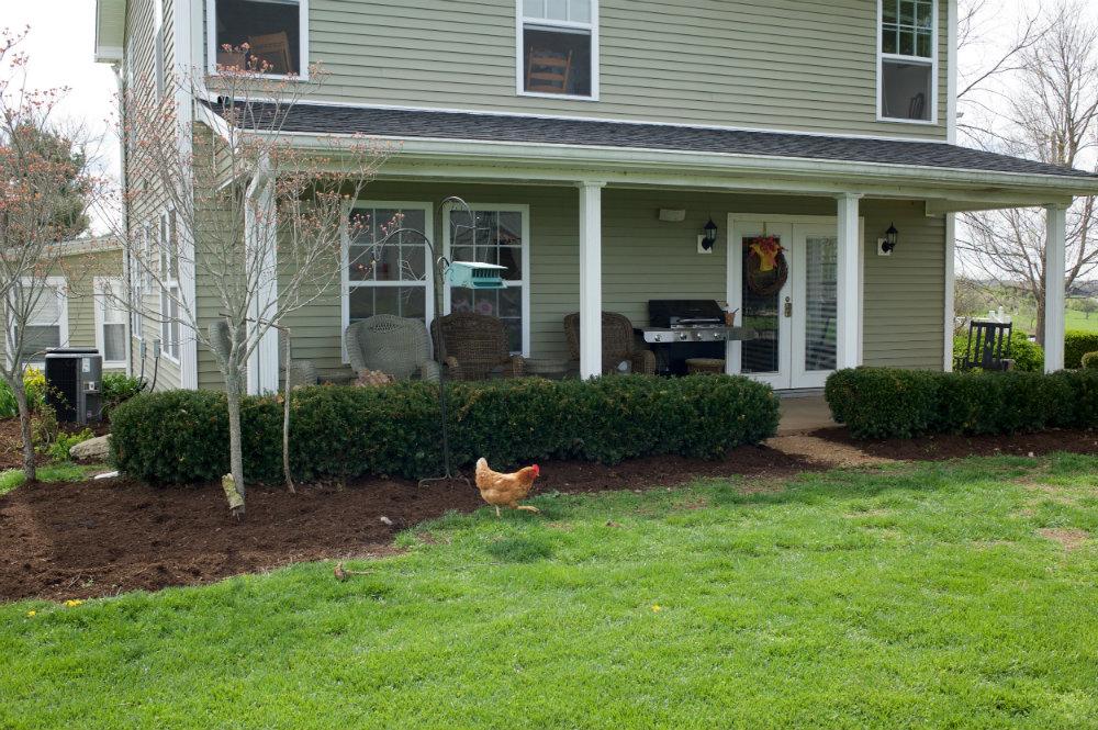 The_Farm_Chicken_Danville_Kentucky_Rethink_Rural.jpg