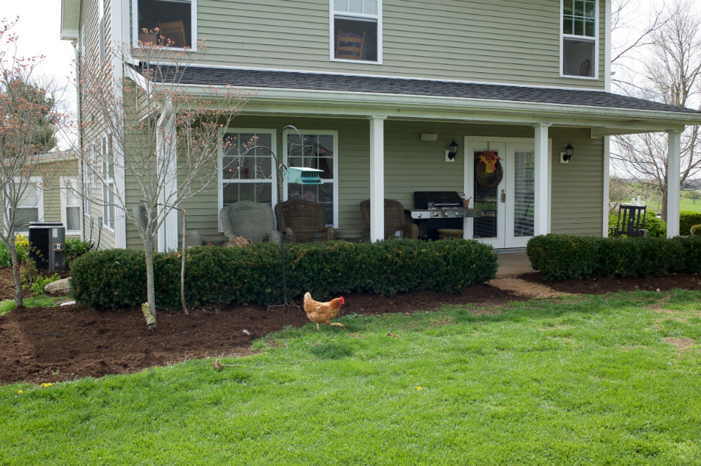 The_Farm_Chicken_Danville_Kentucky_Rethink_Rural.jpg