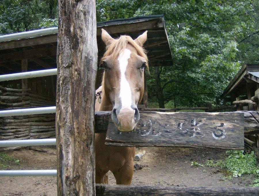 Twin_Valley_Horse_Ranch_Rethink_Rural.jpg