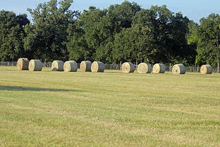Hay Stacks at Aunique Ranch