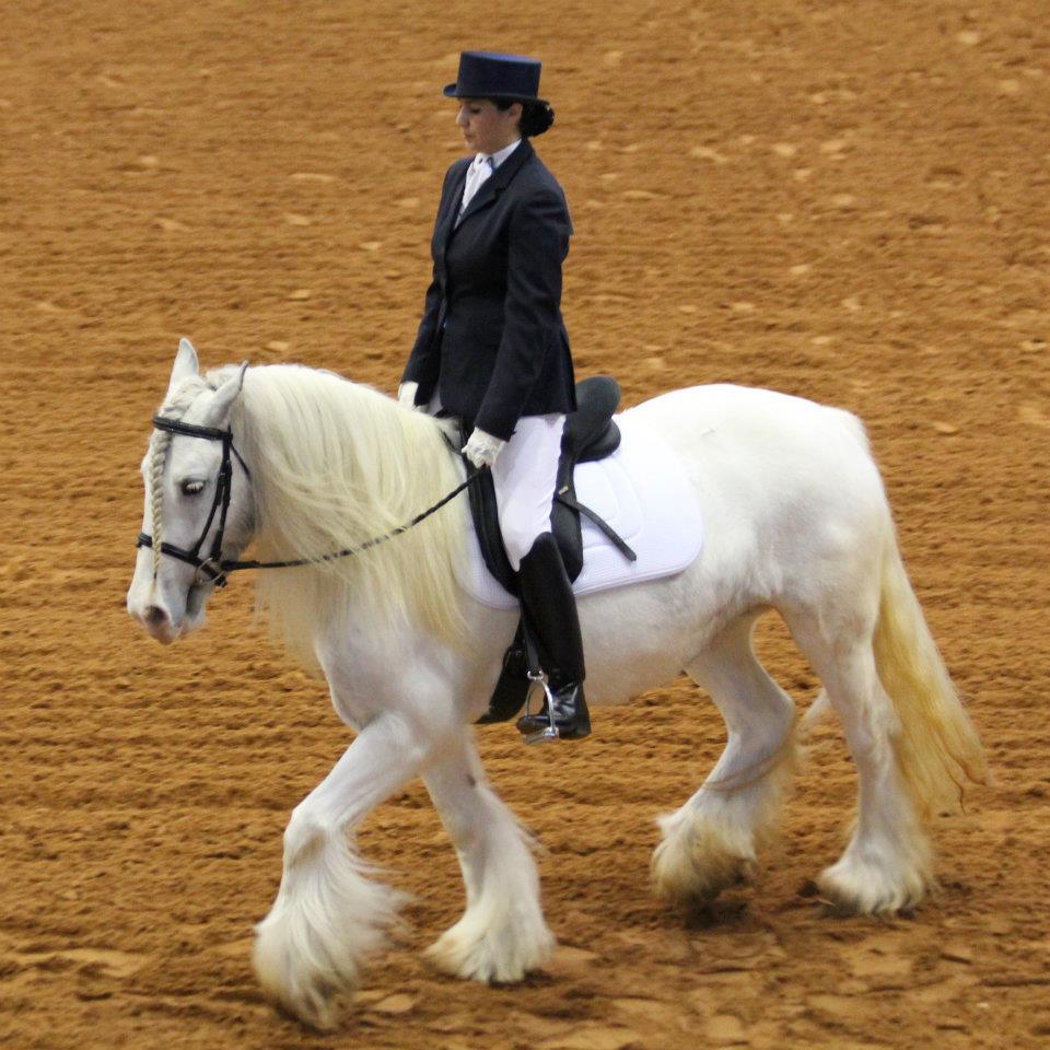 Gypsy Cob Horses
