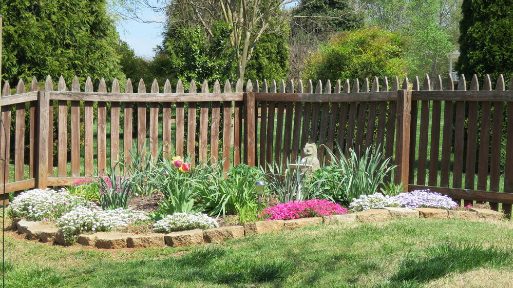 Candy tuft and thrift use for border in butterfly garden