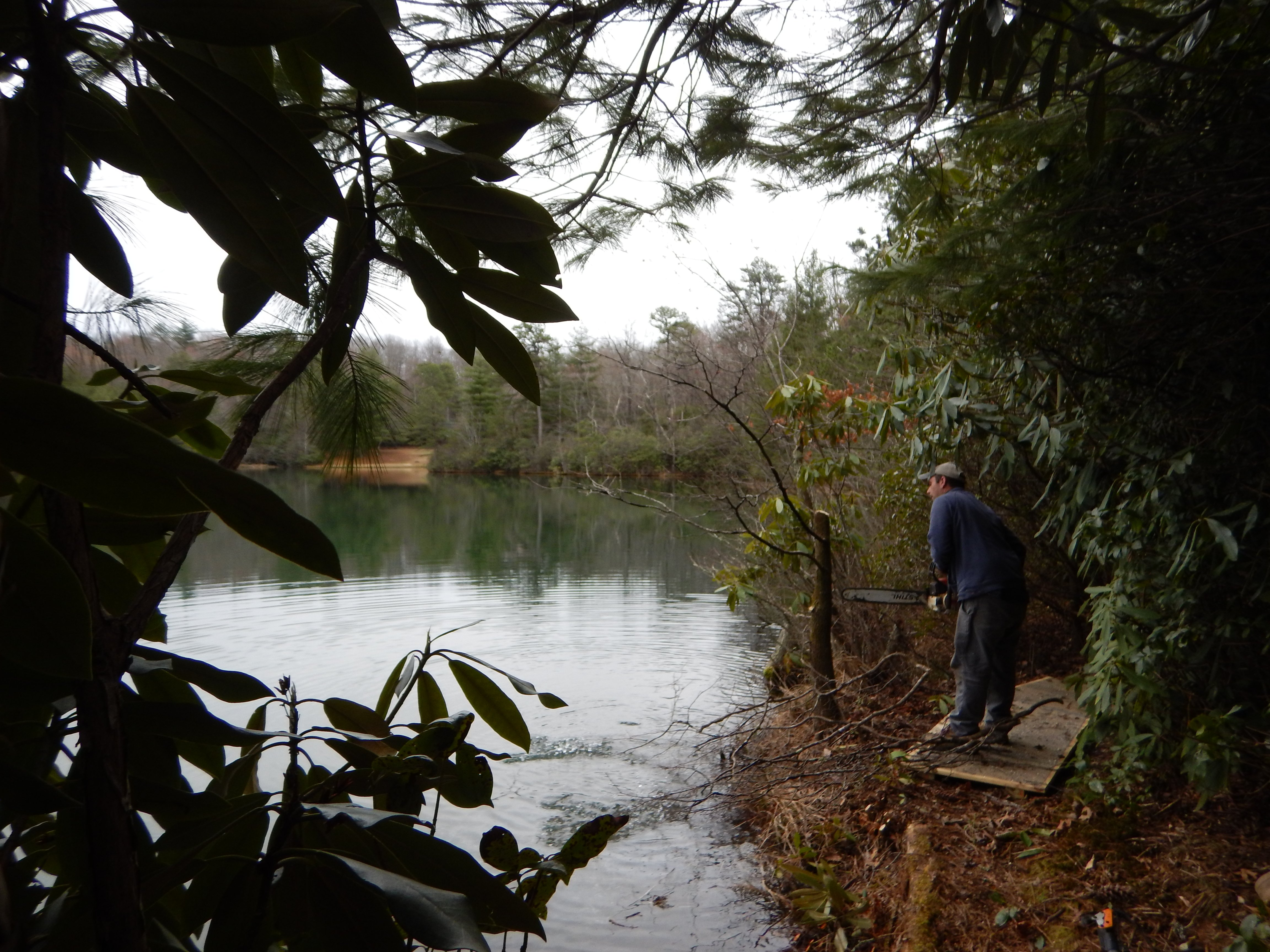 Clearing brush to make fish cover