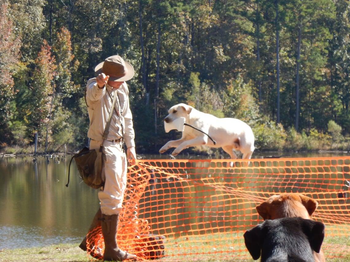 adventure dog training