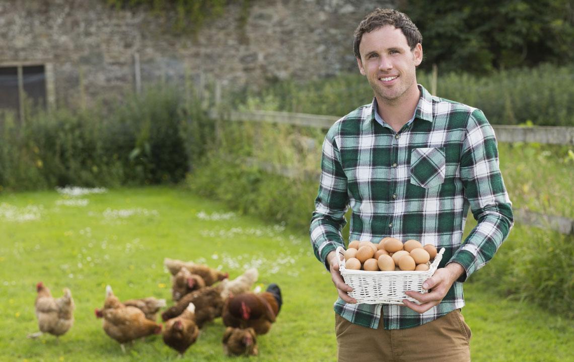 Got (farm) eggs?