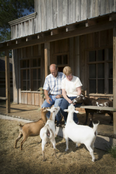 Feeding goats at their western themed home