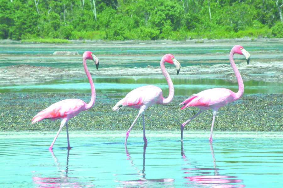 flamingoes photographed in Everglades National Park