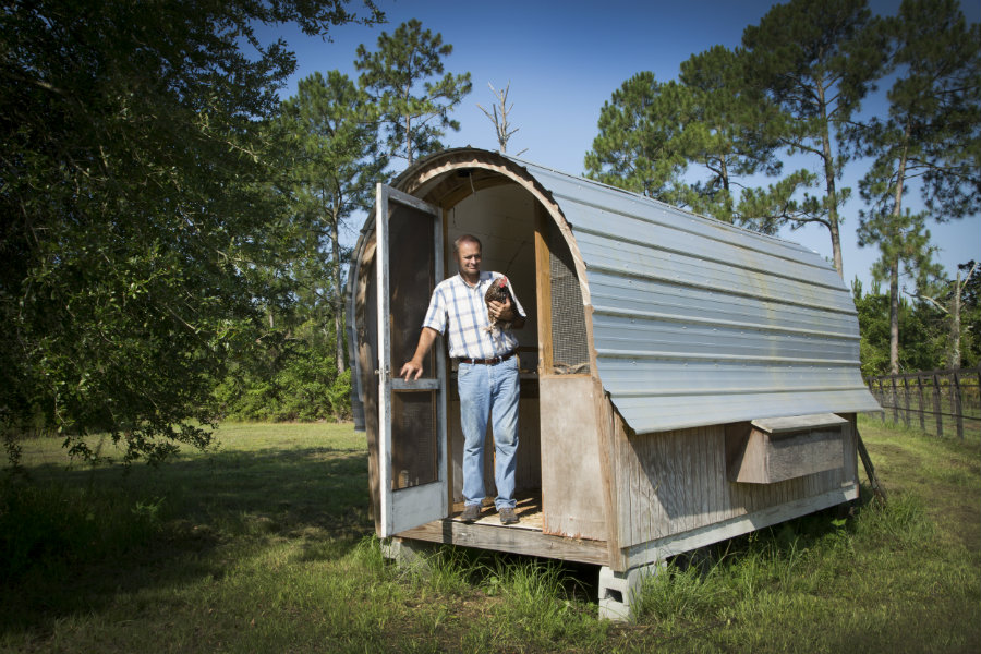 chicken coop shaped like a chuck wagon