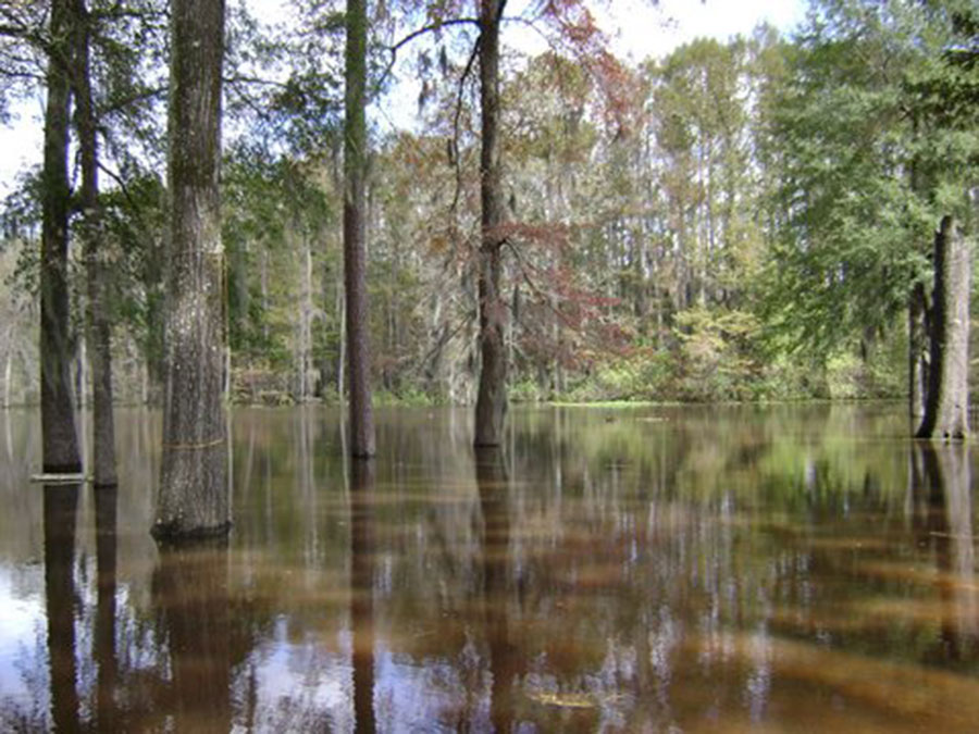 caddo lake in east texas