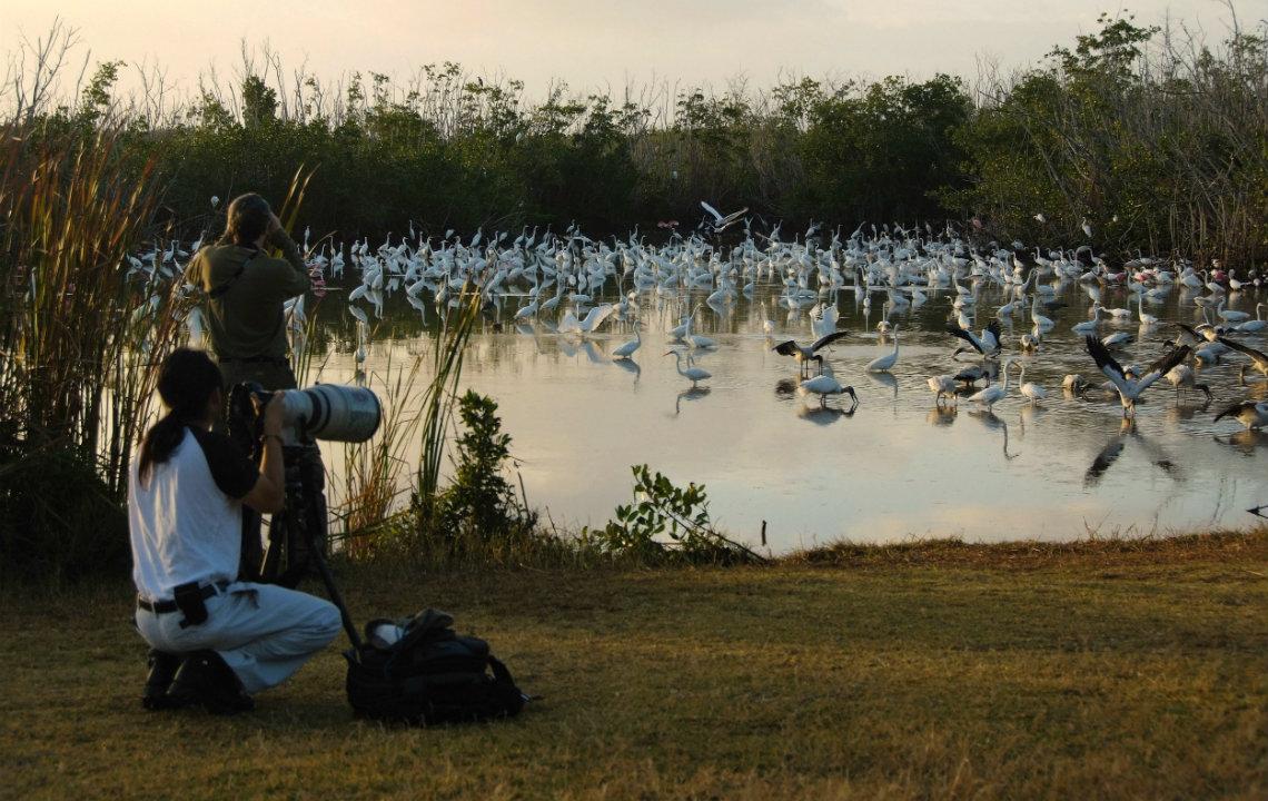 Birding across the South