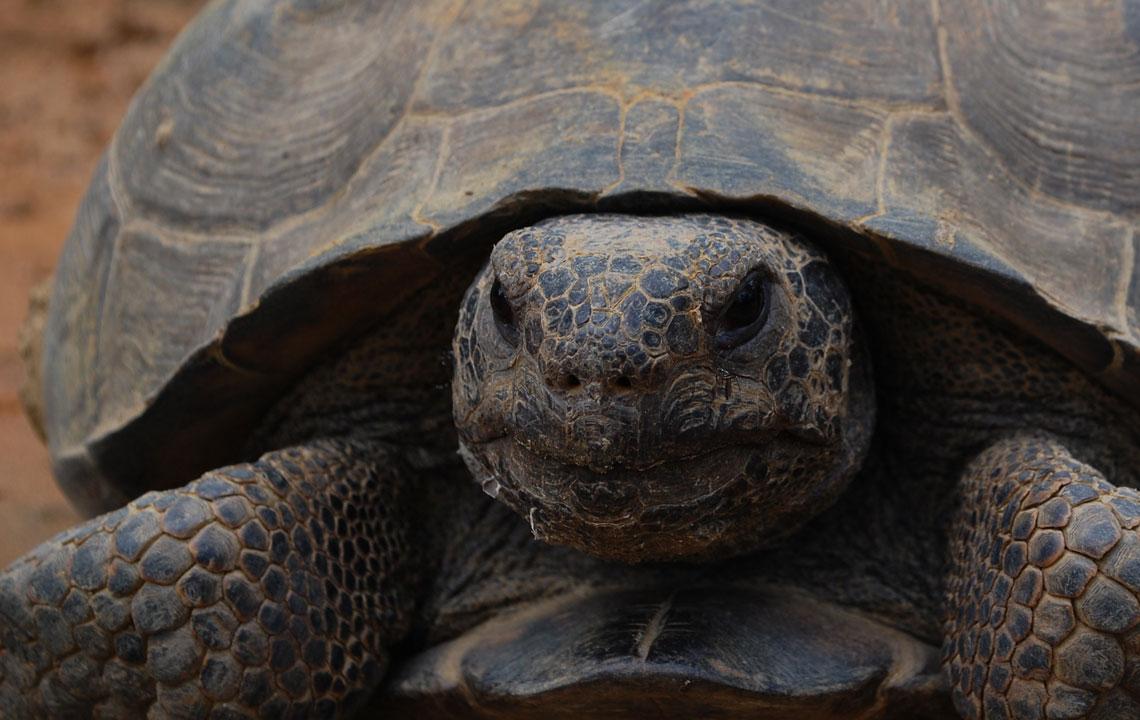 I've got a turtle crush