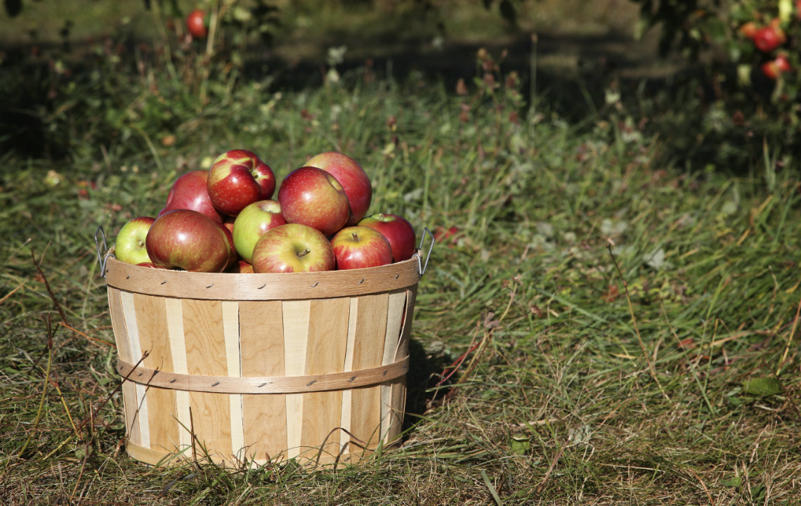 10 clever (and easy) ways to use up apples