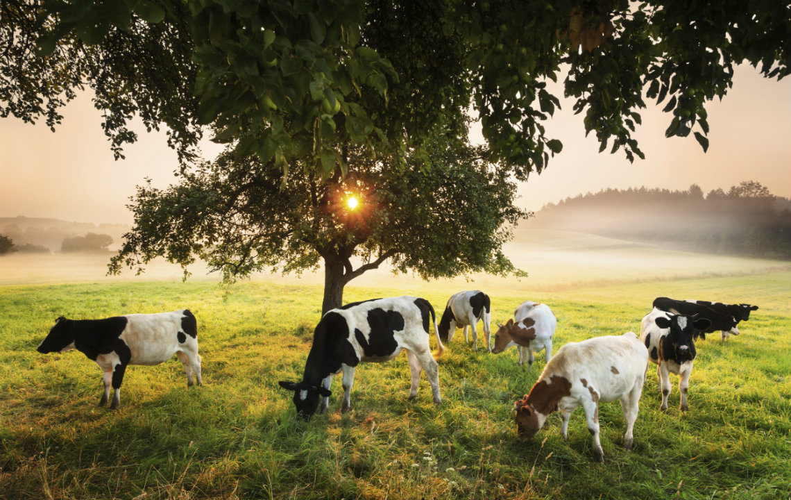 5 types of sustainable farming you can do