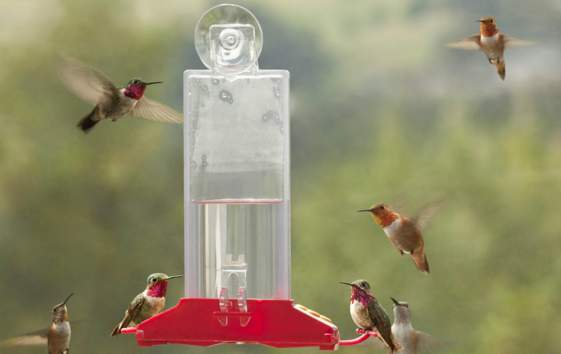 How to make your yard a bird sanctuary