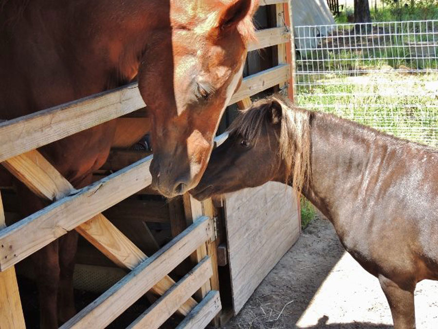 Horses nuzzle each other at NaVera Farms