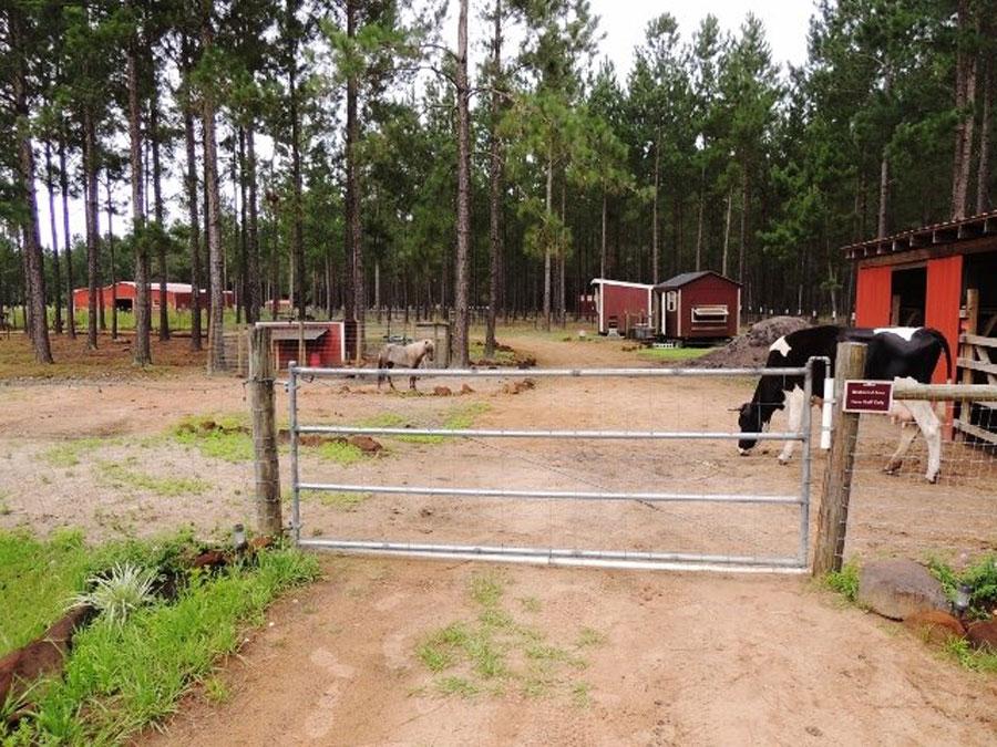 NaVera Farm animals enjoy a break in the farmyard