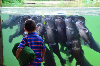 Meeting the fish at Texas Freshwater Fisheries Center in Athens, Texas.