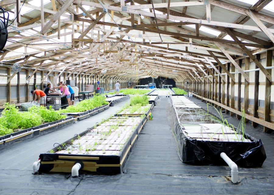 traders hill farm mentors future farmers