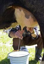Rawmil Milking Low