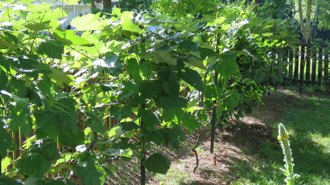 Incorporating fruiting perennials into rural landscapes