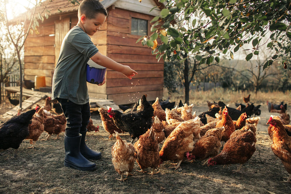 what to look for in a hobby farm