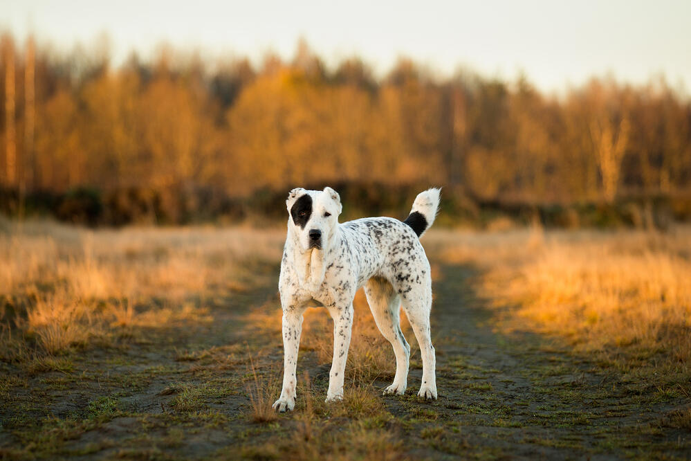 how to choose the best guard dog for a farm