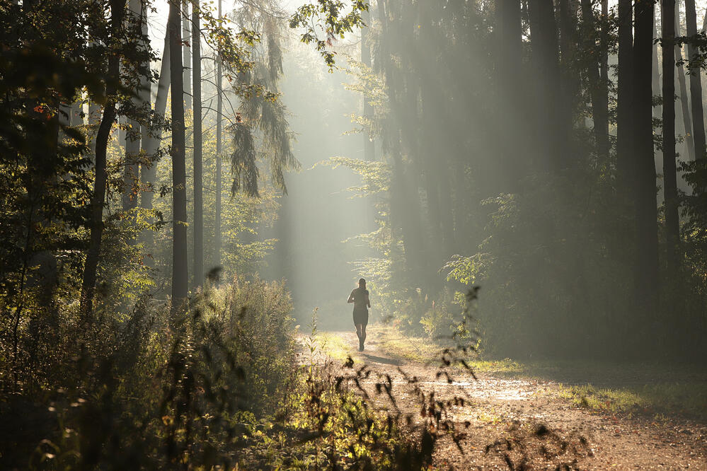 create a forest bathing retreat