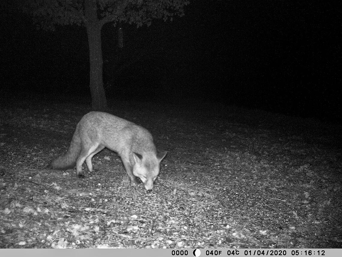 Tips on choosing a wildlife camera