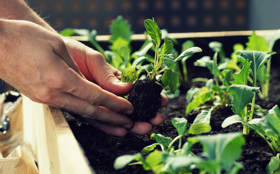 gardening tips to save you time and money