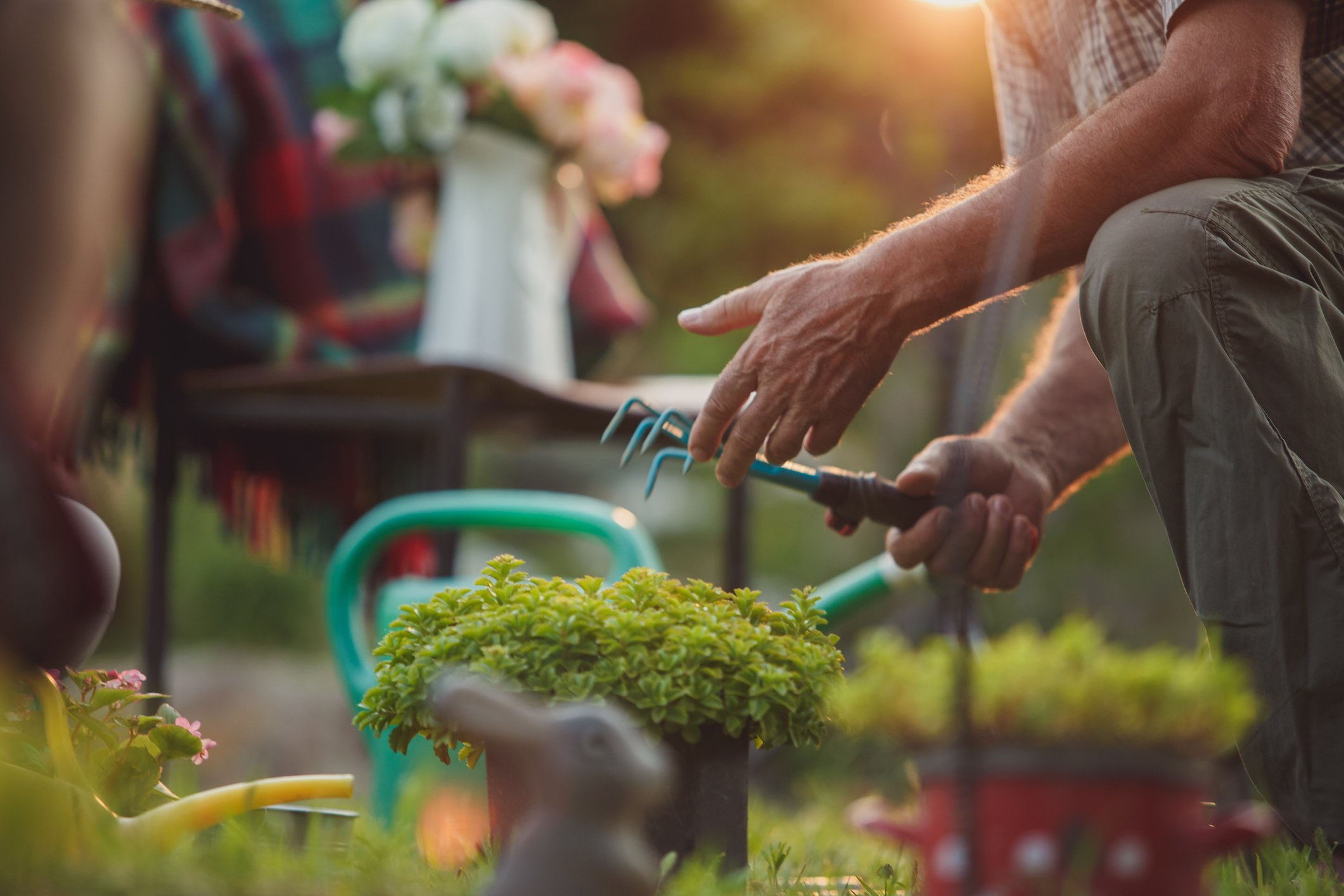 how to plant ornamentals