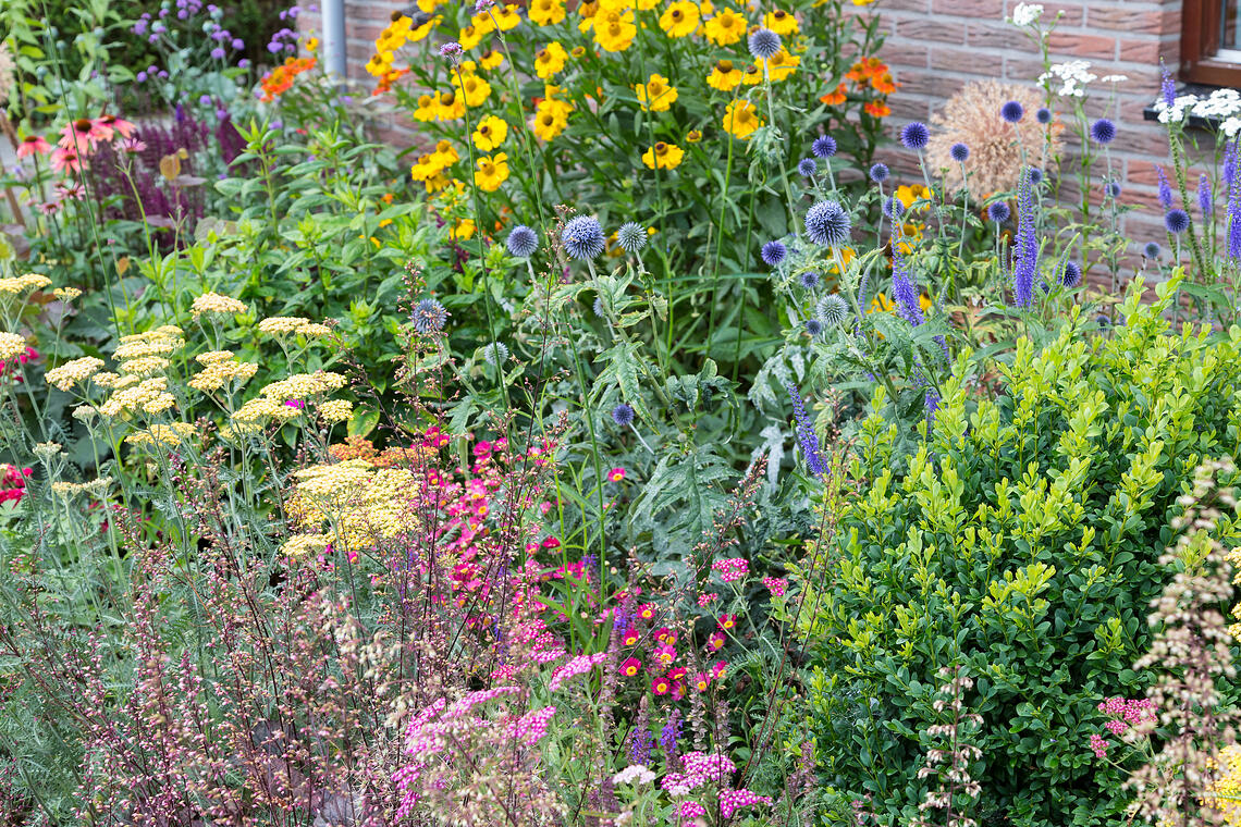 how to transition to perennials in fall